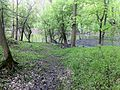 The Des Plaines River - view from the trail - panoramio.jpg