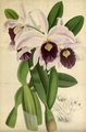 The Orchid Album-01-0032-0009.png
