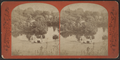 The Playground Pool, from Robert N. Dennis collection of stereoscopic views.png