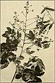 The ornamental trees of Hawaii (1917) (14579322489).jpg