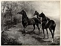 Three horses standing in a field Wellcome V0023284.jpg