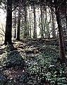 Tilden Park 47c wiki.jpg