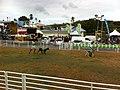 TnT Tobago Goat Race 1.jpg