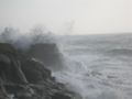 TomCorser Wild Sea Cot Valley Conwall IMG 5577.JPG