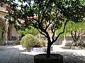 Tomar, Convento de Cristo, Claustro do Cemitério (07).jpg
