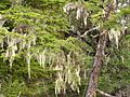 Tongass National Forest 105.jpg