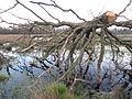 Toter Baum.JPG