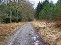 Track, Amberwood Inclosure - geograph.org.uk - 1169730.jpg