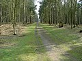 Track Looking SSE in Rowney Warren Wood - geograph.org.uk - 400447.jpg