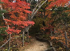 Trail in Seoraksan National Park 2.jpg
