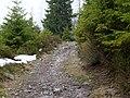 Trail near Sonnenkappe 19.jpg