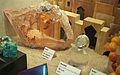 Transvaal Museum-012.jpg