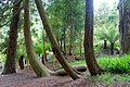 Trebah Garden - Cornwall, England - DSC01353.jpg