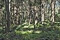 Trees Inner Bowl Gibraltar.jpg