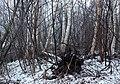 Trees Pikisaari Oulu 20140101.JPG