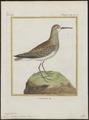 Tringa subarquata - 1700-1880 - Print - Iconographia Zoologica - Special Collections University of Amsterdam - UBA01 IZ17400261.tif