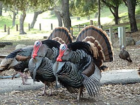 Turkey Lopez04.jpg