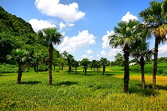 Tuyên Quang Province - Agricultural fields in Tuyên Quang