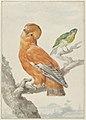 Twee exotische vogels- een rotshaan (Rupicola rupicola) en een kleurvink (Passerina lechlancherii).jpeg