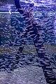 Two Oceans Aquarium 2018 09.jpg