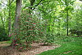 Tyler Arboretum - DSC01798.JPG
