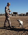 U.S. Marine Corps Cpl. Ross T. Gundlach, a dog handler with 2nd Battalion, 6th Marine Regiment, conducts drills with Casey, an improvised explosive device detection dog, in Helmand province, Afghanistan, Jan 120119-M-MA864-030.jpg