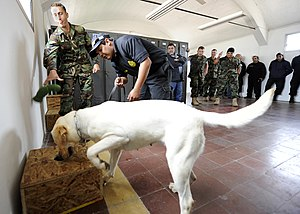 Detection dog - Detection dog training in U.S. Navy military for drug detection