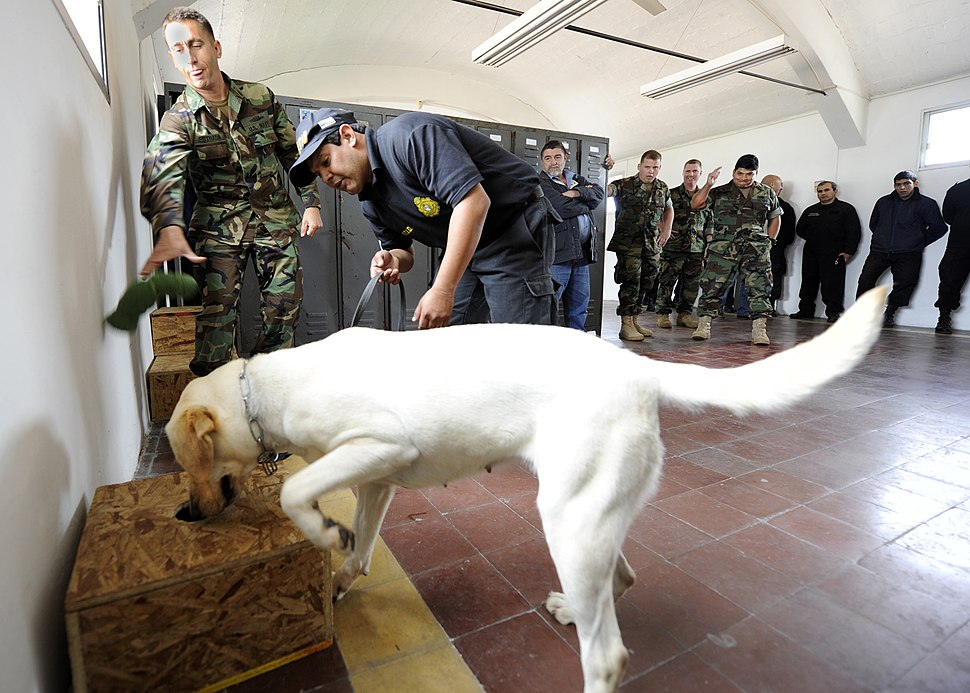 US Navy 101108-N-8546L-040 Chief Master-at-Arms Nick Estrada, left, a U.S. Navy military working dog handler from Orange, Calif