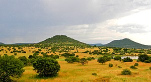 Upland South Africa Savanna