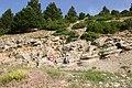 Végétation du Mont Ventoux - 200606.JPG