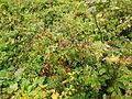 Valley of Flowers 46.JPG