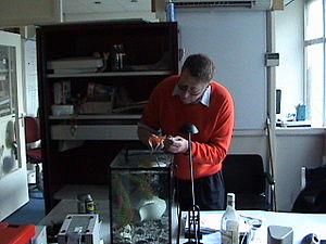 A veterinarian gives an injection to a goldfish
