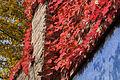 Vienna - Hundertwasser housing complex - 0454.jpg