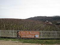Vigne Pasteur Arbois 001.JPG