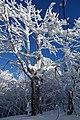 Vihorlat (v zime) 029.jpg