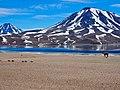 Vincuna & Lagunas Miscanti, Atacama Desert, Chile.jpg