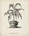 Vintage illustrations by Benjamin Fawcett for Shirley Hibberd digitally enhanced by rawpixel 43.jpg