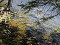 Vylet k Cernemu jezeru Sumava - 9.srpna 2010 149.JPG