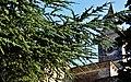 WLM14ES - Monestir de Santa Maria de Bellpuig de les Avellanes, Os de Balaguer, La Noguera - MARIA ROSA FERRE (4).jpg