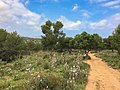 Wanderweg Calla Ratjada (22225221265).jpg
