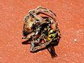 Wasp vs Spider Fight (2786000021).jpg
