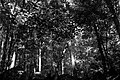 Waterfall Shade (18882305954).jpg