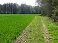 Wayfarer's Walk south of Shere Copse - geograph.org.uk - 1270760.jpg
