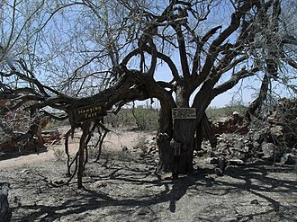 Hanging tree (United States) - The Hanging Tree in Vulture City, Arizona.