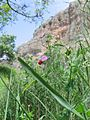 Wild Pea Blossoms (452728254).jpg