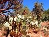 Wild wild cacti 01.jpg