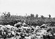 Wiltshire Regiment Thiepval 7 August 1916