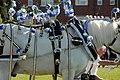 Winner, decorated horses (239289210).jpg