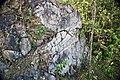 Winooski Dolomite (Middle Cambrian; Chimney Corner, Vermont, USA) 7.jpg