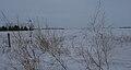 WinterAspenParkland.jpg